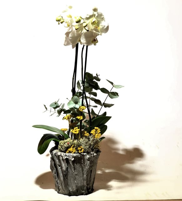 Özel Saksıda Beyaz Orkide