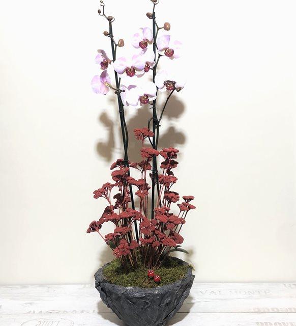 Pembe Orkide Consept