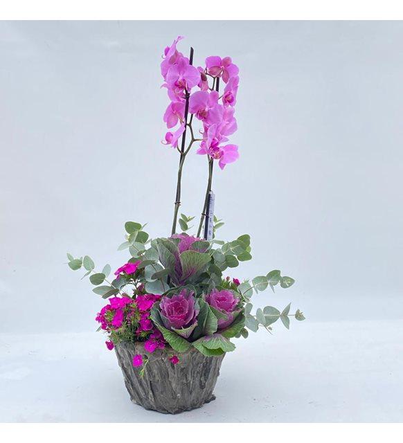 2 Dallı Mor Orkide Serisi