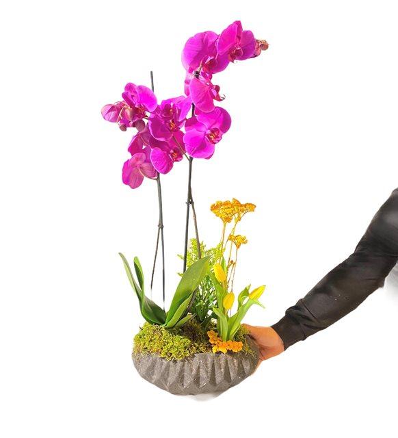 2li Midi Mor Orkide Sarı Lale Serisi