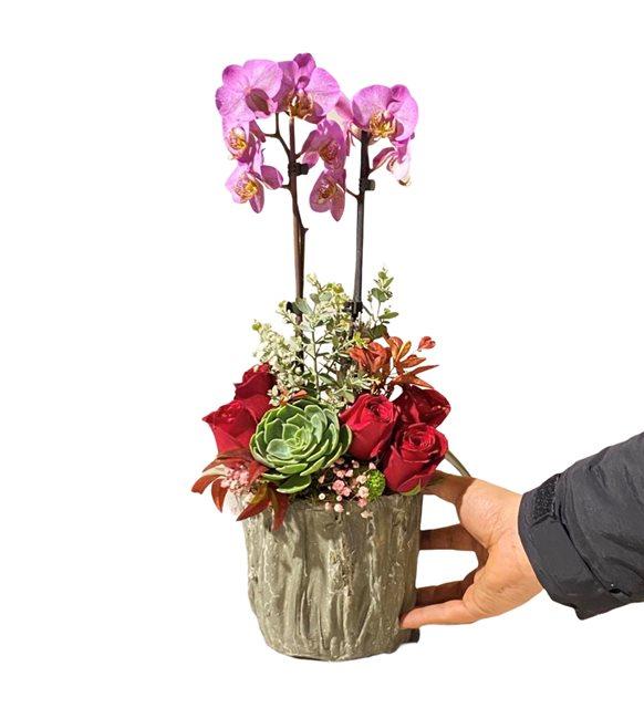Abigial Orkide Güllü Sculent Serisi
