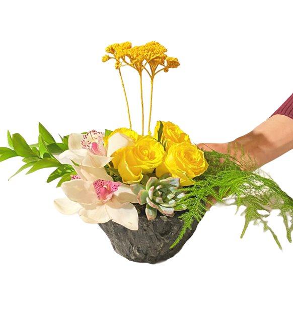 Akant Orkide Sukulent Serisi