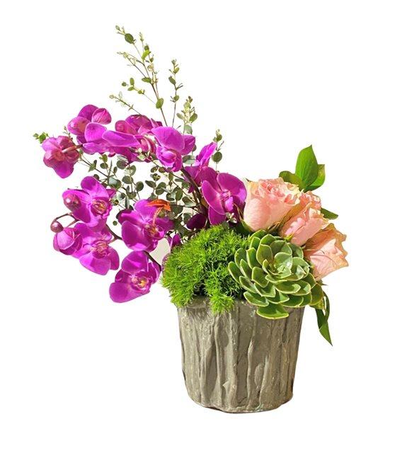 Alerice Renkli Orkide Serisi