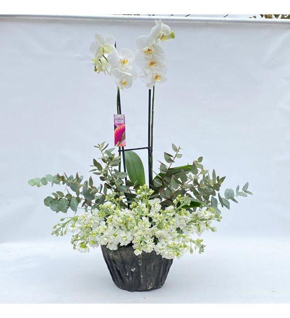 Amanda Orkide Bahçemiz
