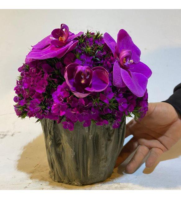 Amanda Orkideli Sevgi Çiçeği