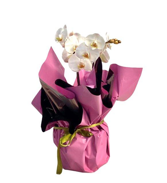 Behire 2Dallı Midi Beyaz Orkide Serisi