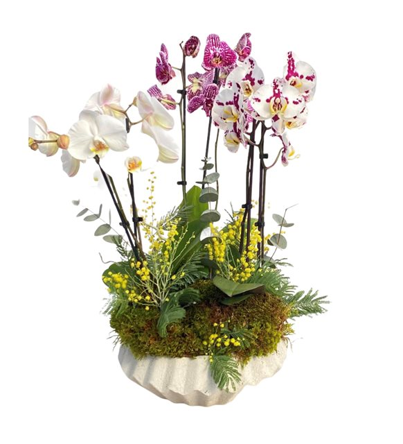 Binay Midi Renkli Orkide Serisi