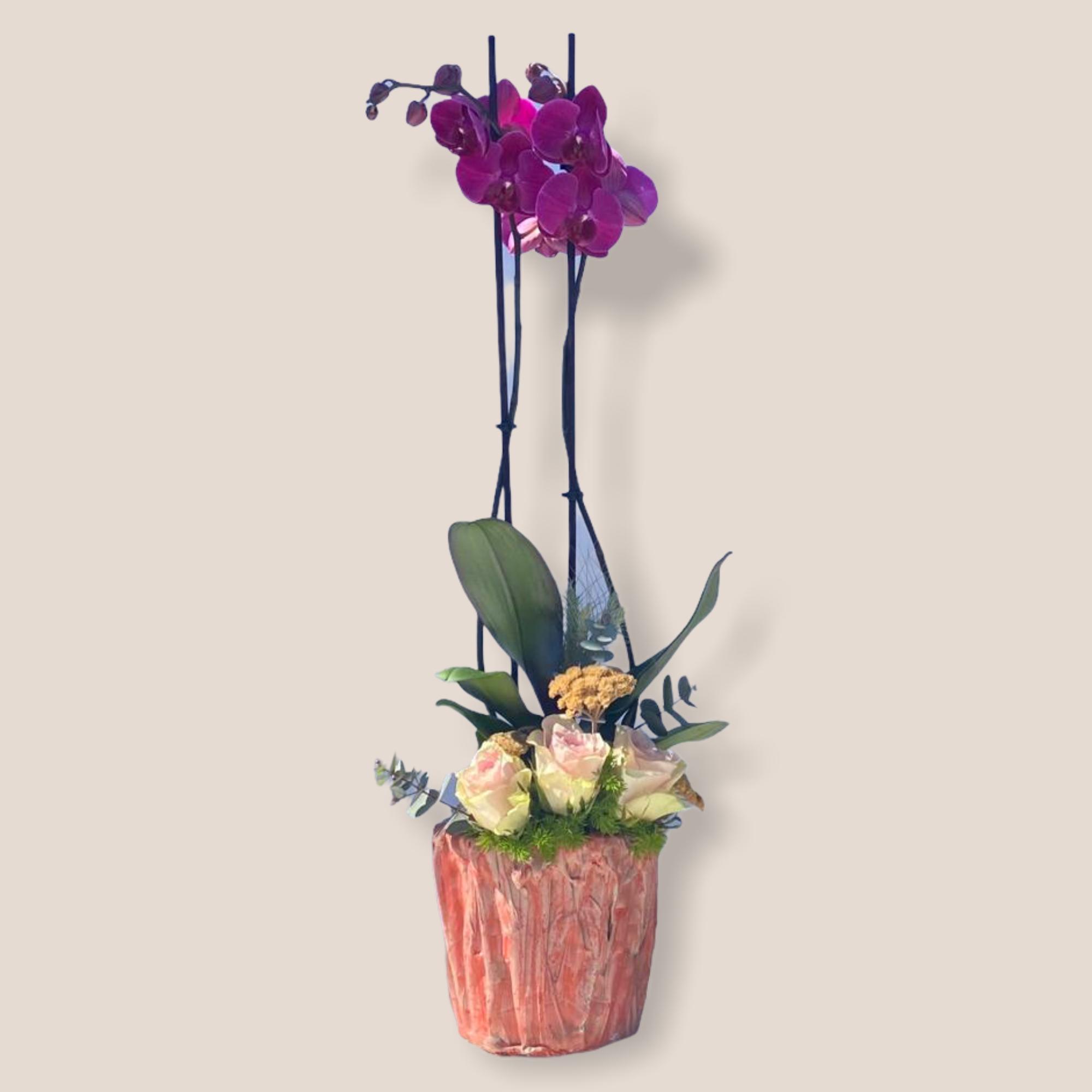 Bloossom Orkide Serisi