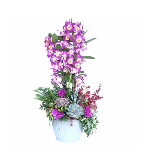Denrobium orkide arajman Serisi
