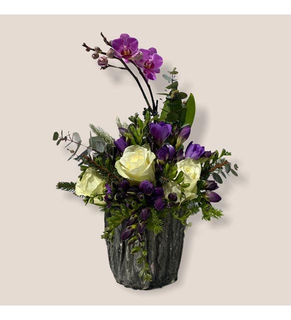 İsla 2li Mini Orkideli Gül Serisi