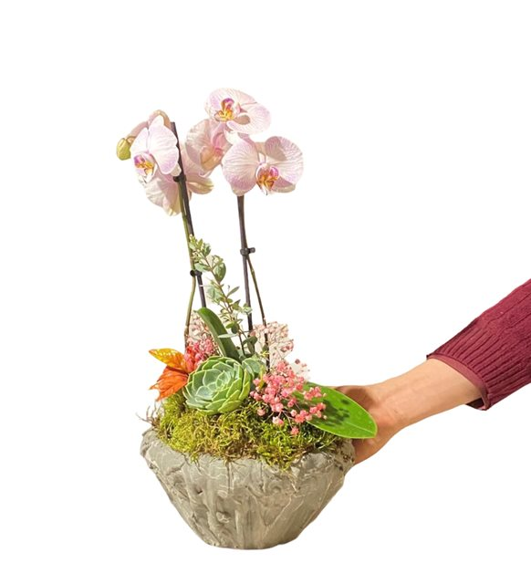 Kimberly Mini Orkide Serisi