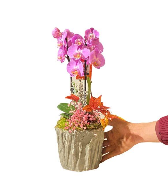 Lef Midi Orkide Serisi