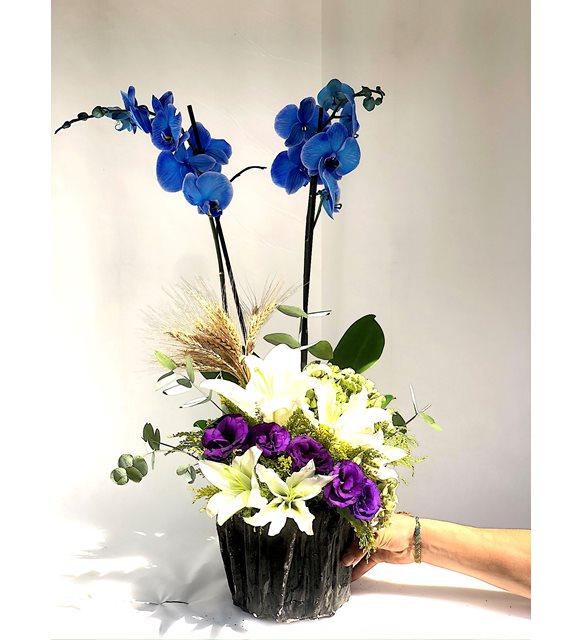 Mavi Orkide Lilyum Serisi