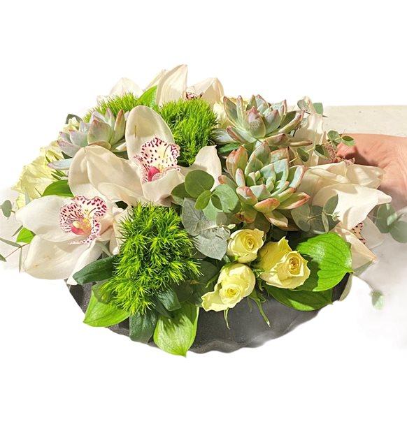 Oliva Orkide Gül Serisi
