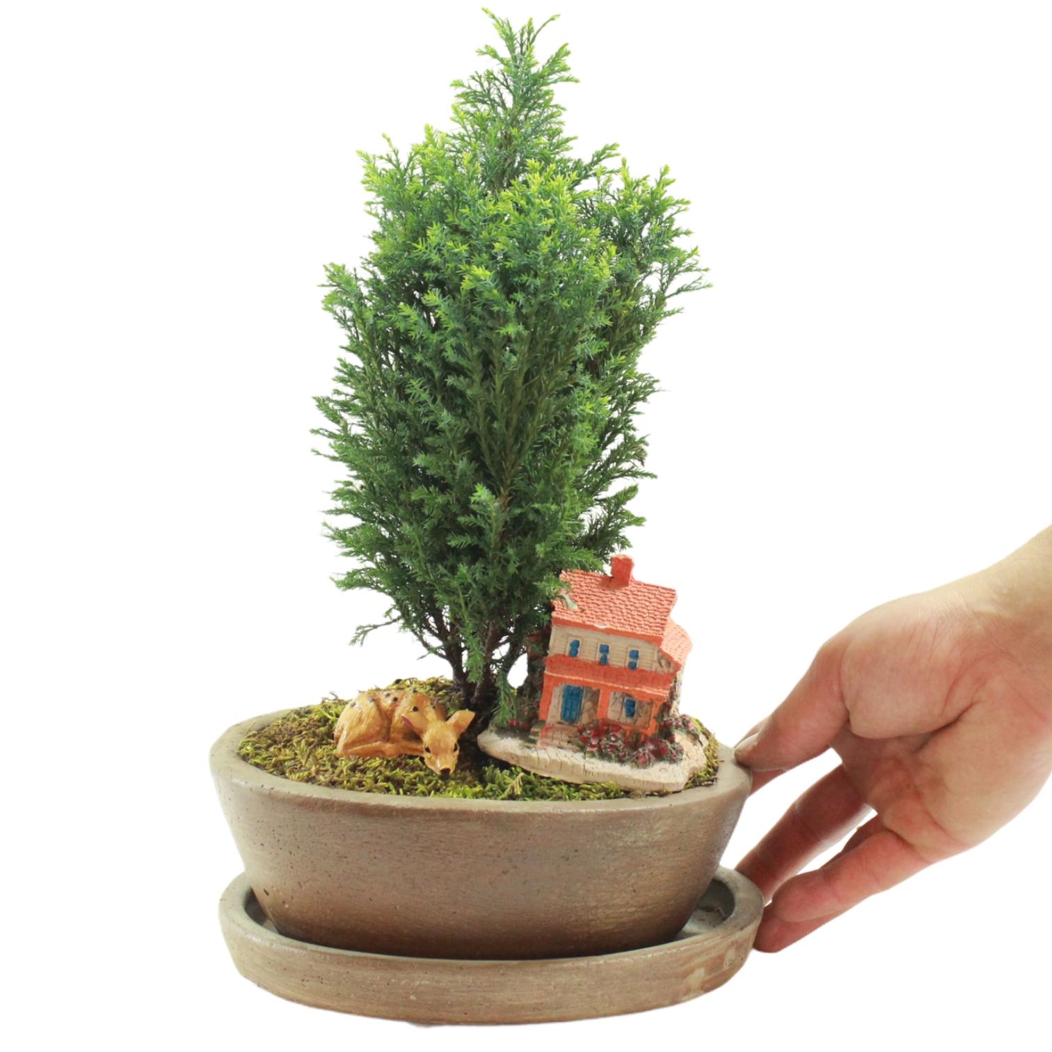 Özel Saksıda Dekoratif Ev Çam Bonsai