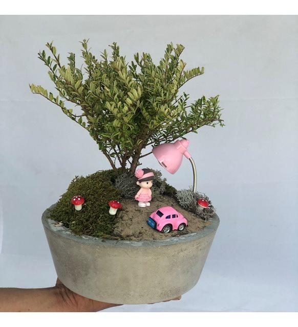 Turunen Berberis Bonsai Bahçemiz