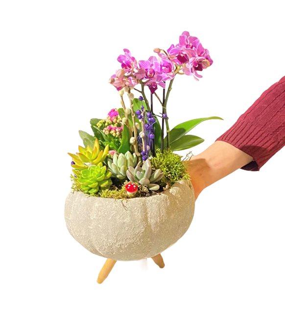 Yana Orkide Sukulent Serisi